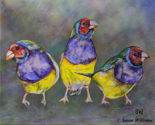(CreativeWork) Red-headed Gouldian Finches by Susan Willemse. Acrylic Paint. Shop online at Bluethumb.