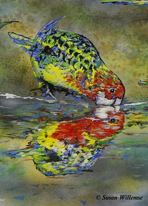 (CreativeWork) Eastern Rosella reflections by Susan Willemse. Acrylic Paint. Shop online at Bluethumb.