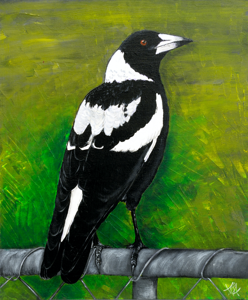 (CreativeWork) Magpie Waiting by Annette Appleby. Acrylic Paint. Shop online at Bluethumb.