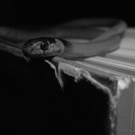 (CreativeWork) SNAKE Ed. 1 of 60 by Nadya Doubell. Photograph. Shop online at Bluethumb.