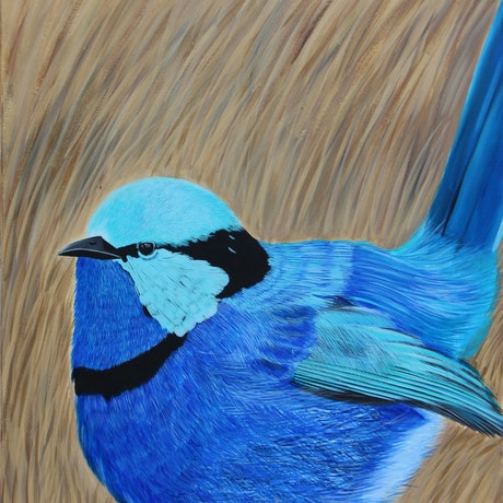 (CreativeWork) Fairy Wren  by Sudha Palani. Acrylic Paint. Shop online at Bluethumb.