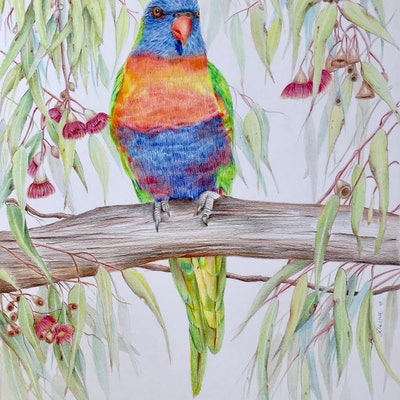 (CreativeWork) Rainbow Lorikeet by Jacqui Cleijne. #<Filter:0x00007f97944111c0>. Shop online at Bluethumb.