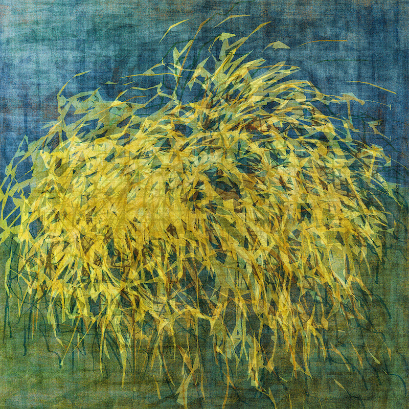(CreativeWork) Wanaka Pampas Grass on canvas Ed. 6 of 10 by George Hall. print. Shop online at Bluethumb.
