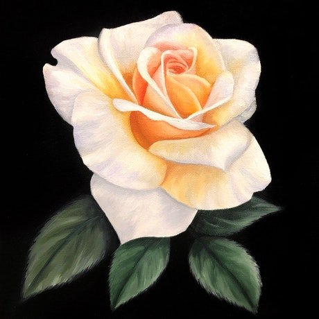 (CreativeWork) Peach Rose by Ashley Bunting. Oil Paint. Shop online at Bluethumb.