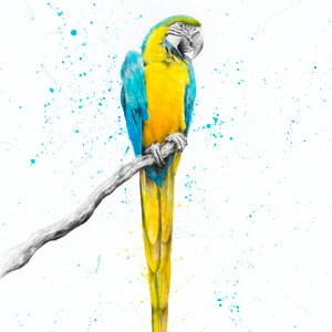 (CreativeWork) Mischievous Macaw by Ashvin Harrison. arcylic-painting. Shop online at Bluethumb.