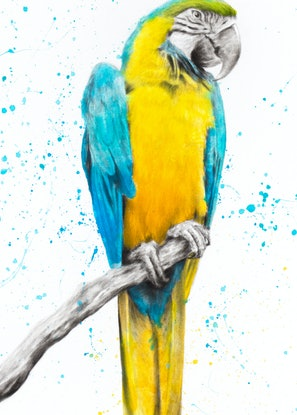 (CreativeWork) Mischievous Macaw by Ashvin Harrison. #<Filter:0x00005597d84bedb0>. Shop online at Bluethumb.