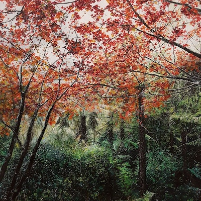 (CreativeWork) Autumn Overture by Fae Ballingall. #<Filter:0x00007f9790ba0ea8>. Shop online at Bluethumb.