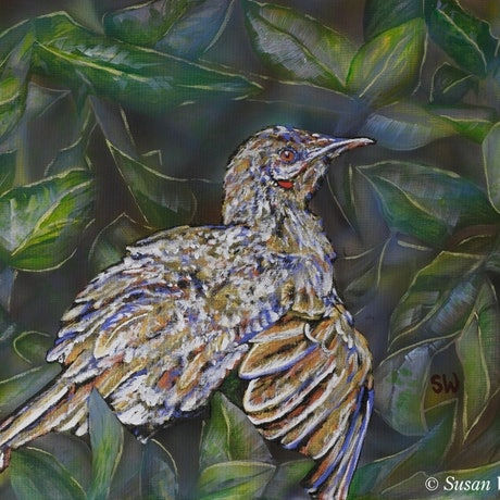 (CreativeWork) Sunbathing Wattlebird by Susan Willemse. Acrylic Paint. Shop online at Bluethumb.