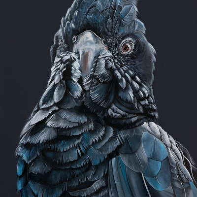"""(CreativeWork) """"BRONSON"""" The Black Cockatoo Reproduction Stretched Canvas Ed. 2 of 100 by HEYLIE MORRIS. print. Shop online at Bluethumb."""