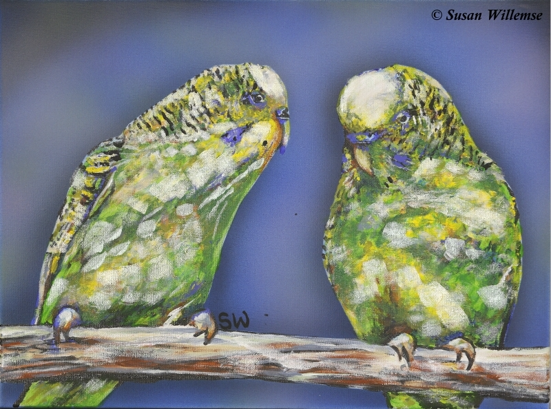 (CreativeWork) Budgie Love by Susan Willemse. Acrylic Paint. Shop online at Bluethumb.