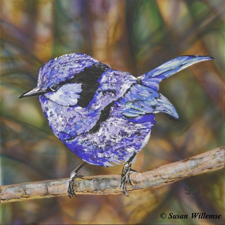 (CreativeWork) Splendid Fairy Wren by Susan Willemse. Acrylic Paint. Shop online at Bluethumb.