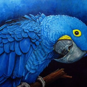 "(CreativeWork) ""Blu"" Hyacinth Macaw Portrait - Limited Edition Giclee Print Ed. 3 of 100 by Debra Dickson. print. Shop online at Bluethumb."