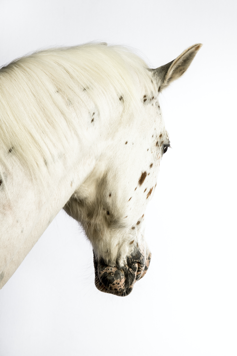 (CreativeWork) TEALC HORSE  by GRACE COSTA. photograph. Shop online at Bluethumb.