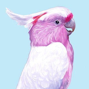(CreativeWork) Major Mitchell's Cockatoo Ed. 1 of 40 by Murilo Manzini (a.k.a. Muzi). print. Shop online at Bluethumb.