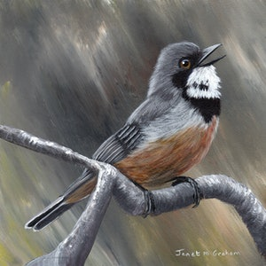 (CreativeWork) Rufous Whistler by Janet Graham. arcylic-painting. Shop online at Bluethumb.