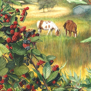 (CreativeWork) Abundance - Country Farm Landscape with Horses by Jillian Crider. watercolour. Shop online at Bluethumb.