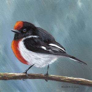 (CreativeWork) Red  Capped Robin by Janet Graham. #<Filter:0x00007fa566e126f8>. Shop online at Bluethumb.