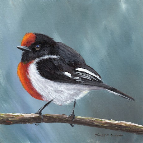 (CreativeWork) Red  Capped Robin by Janet Graham. Acrylic Paint. Shop online at Bluethumb.
