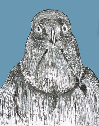 (CreativeWork) Portrait of a Needy Pigeon by Anna Turnbull. #<Filter:0x00007fa57eb45e58>. Shop online at Bluethumb.