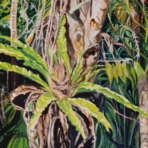 (CreativeWork) Bird's nest fern, Daintree rainforest  by Vanessa Whittington. oil-painting. Shop online at Bluethumb.
