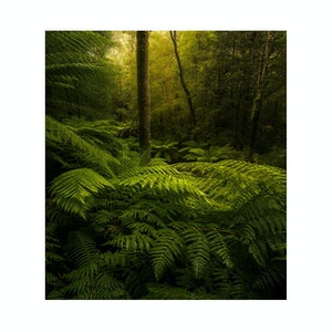 (CreativeWork) Forest Study #1 Ed. 1 of 30 by Robert Salisbury. #<Filter:0x0000562339ce8968>. Shop online at Bluethumb.