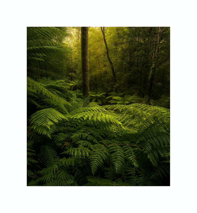 (CreativeWork) Forest Study #1 Ed. 1 of 30 by Robert Salisbury. Photograph. Shop online at Bluethumb.