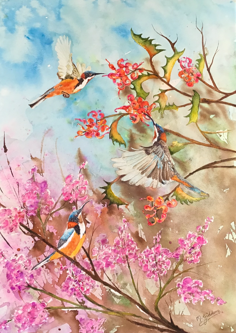 (CreativeWork) Spring is Here (Australian Spinebills) by Michael Giddens. Watercolour Paint. Shop online at Bluethumb.