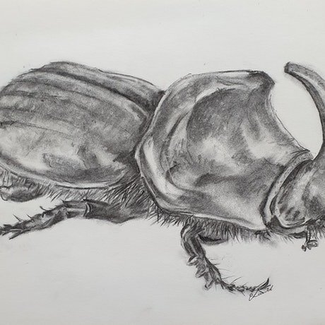 (CreativeWork) Rhinoceros beetle by Mezma & Azzayal Laird. Drawings. Shop online at Bluethumb.