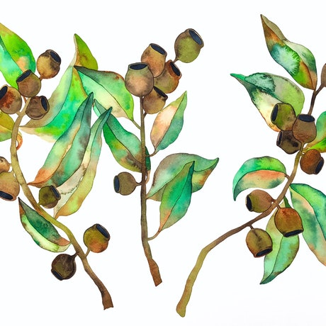 (CreativeWork) Eucalyptus Trio by Kirsty Anderson. Watercolour Paint. Shop online at Bluethumb.