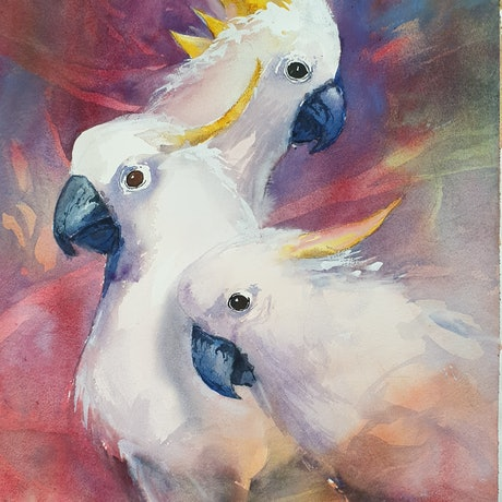 (CreativeWork) SULPHURE CRESTED COCKATOO'S by Anki Wickison. Watercolour Paint. Shop online at Bluethumb.