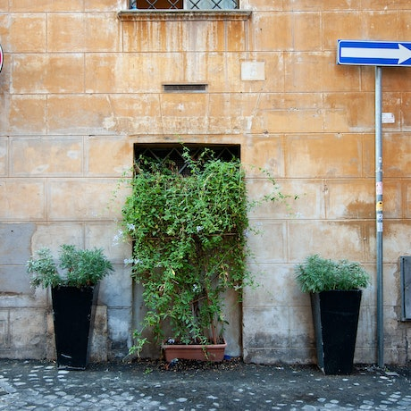 (CreativeWork) Rome street by GRACE COSTA. Photograph. Shop online at Bluethumb.