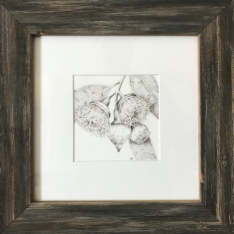 (CreativeWork) Gum Blossom 2  by Jess Black. Drawing. Shop online at Bluethumb.