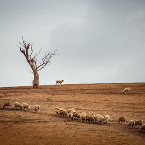 (CreativeWork) Waiting for rain - Limited edition No 2  Ed. 1 of 1 by Wendy Philip. photograph. Shop online at Bluethumb.