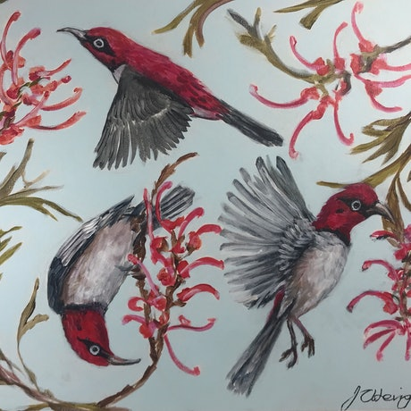(CreativeWork) Scarlet Honeyeater and Grevillea by Judith Lanigan. Acrylic Paint. Shop online at Bluethumb.