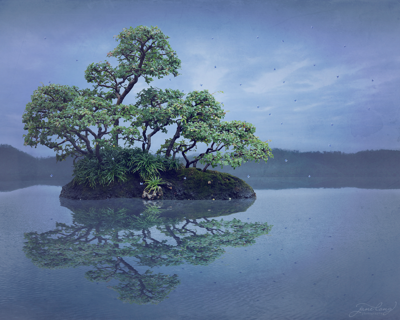 (CreativeWork) Wild Bonsai - Chinese Elm  Ed. 1 of 25 by Jane Long. Photograph. Shop online at Bluethumb.