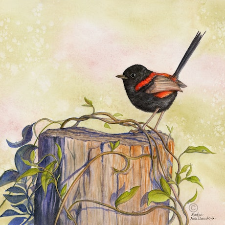 (CreativeWork) Sunset Dancer - Red-backed Fairywren watercolour painting by Nadya Neklioudova. Watercolour Paint. Shop online at Bluethumb.