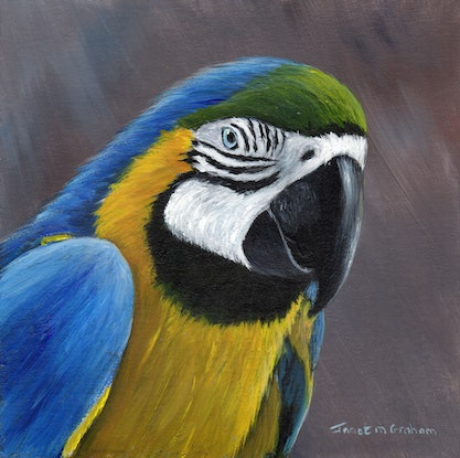 (CreativeWork) Blue and Yellow Macaw by Janet Graham. Acrylic Paint. Shop online at Bluethumb.
