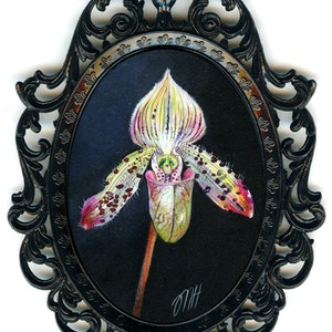 (CreativeWork) Slipper Orchid by Melissa Hartley. acrylic-painting. Shop online at Bluethumb.