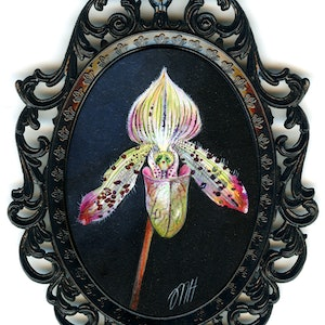 (CreativeWork) Slipper Orchid by Melissa Hartley. arcylic-painting. Shop online at Bluethumb.