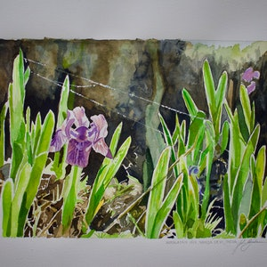 (CreativeWork) Himalayan Iris, Nanda Devi, India by John Barcham. watercolour. Shop online at Bluethumb.