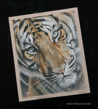 (CreativeWork) Tiger Face by Holley Ryan. Drawings. Shop online at Bluethumb.