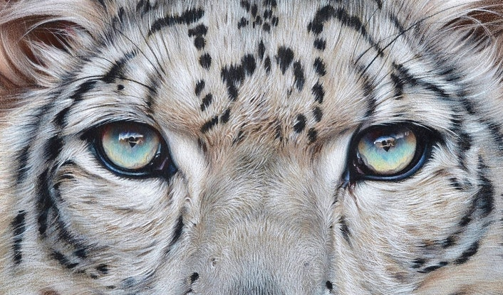 """(CreativeWork) """"Faces of the wild - Snow Leopard""""  Ed. 2 of 100 by Elena Kolotusha. #<Filter:0x00007f3c250ffda8>. Shop online at Bluethumb."""