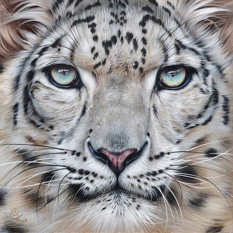 "(CreativeWork) ""Faces of the wild - Snow Leopard""  Ed. 7 of 50 by Elena Kolotusha. print. Shop online at Bluethumb."
