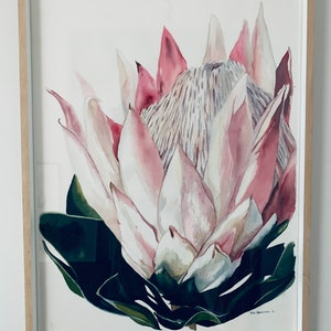 (CreativeWork) King Protea 2 by Julie Christensen. watercolour. Shop online at Bluethumb.