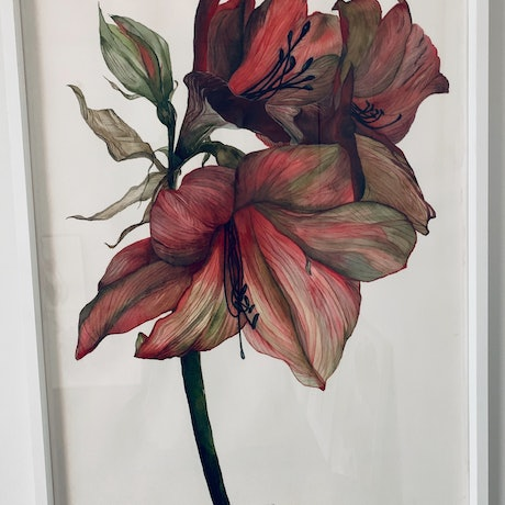 (CreativeWork) Amaryllis by Julie Christensen. Watercolour Paint. Shop online at Bluethumb.