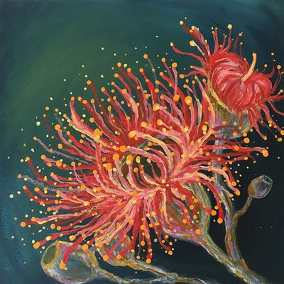 (CreativeWork) Flowering Gum 2 by Nevena Nikolic. acrylic-painting. Shop online at Bluethumb.
