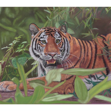 (CreativeWork) Siberian Tiger (framed) by Gary Thomas. Drawings. Shop online at Bluethumb.