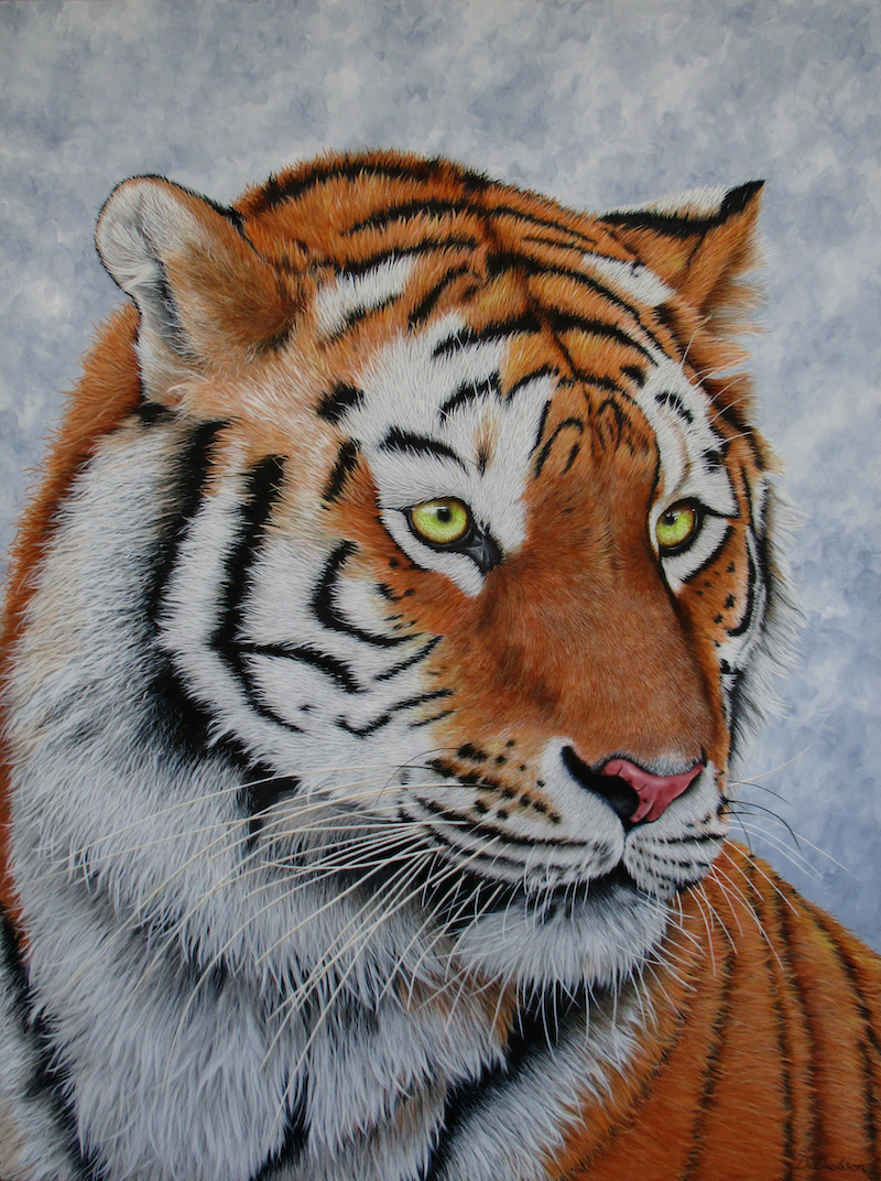 (CreativeWork) Amur Tiger Portrait - Limited Edition Giclee Print Ed. 1 of 100 by Debra Dickson. Print. Shop online at Bluethumb.