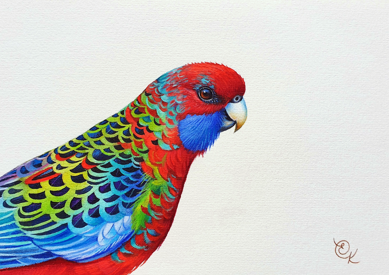 (CreativeWork) Juvenile Crimson Rosella by Elena Kolotusha. mixed-media. Shop online at Bluethumb.
