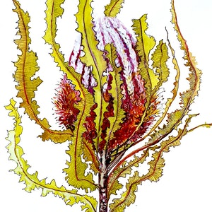 (CreativeWork) Banksia menziesii 1 by Jeanette Giroud. watercolour. Shop online at Bluethumb.
